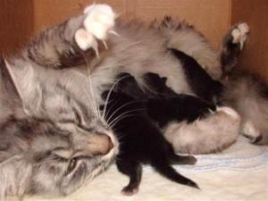 Kat bevalling