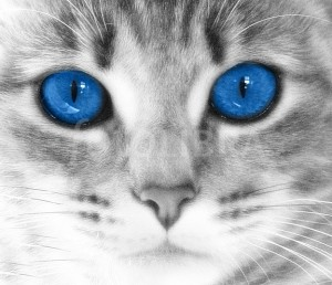 Blue Cat's Eyes Close |Up