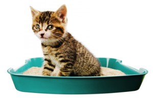 Kat kattenbak 1