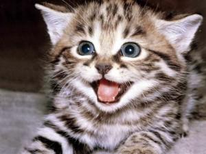 Kitten mooi