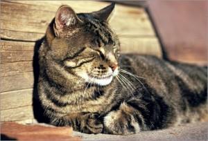 Kat in zon