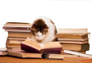 Kat leest 2