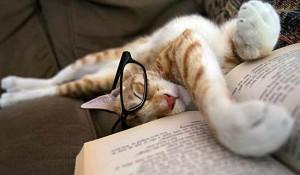 Kat leest