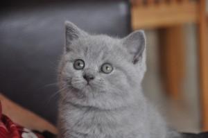 Kitten van Bram x Emy