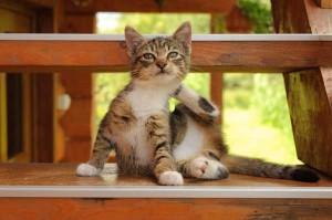 Kitten krabt