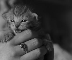 Kitten en Eva