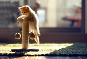 Krabpaal kitten