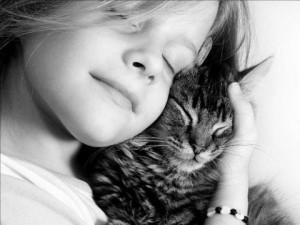 Kat knuffel 2