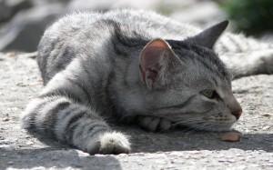 Kat ziek 4