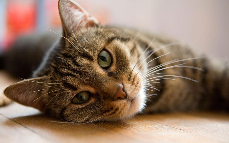 kat ziekte van lyme