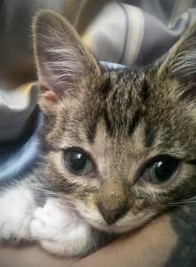 Lil BUB kitten