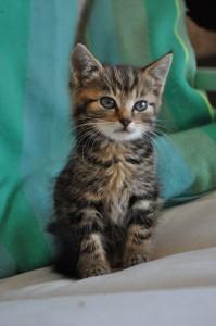 Kitten Lucy