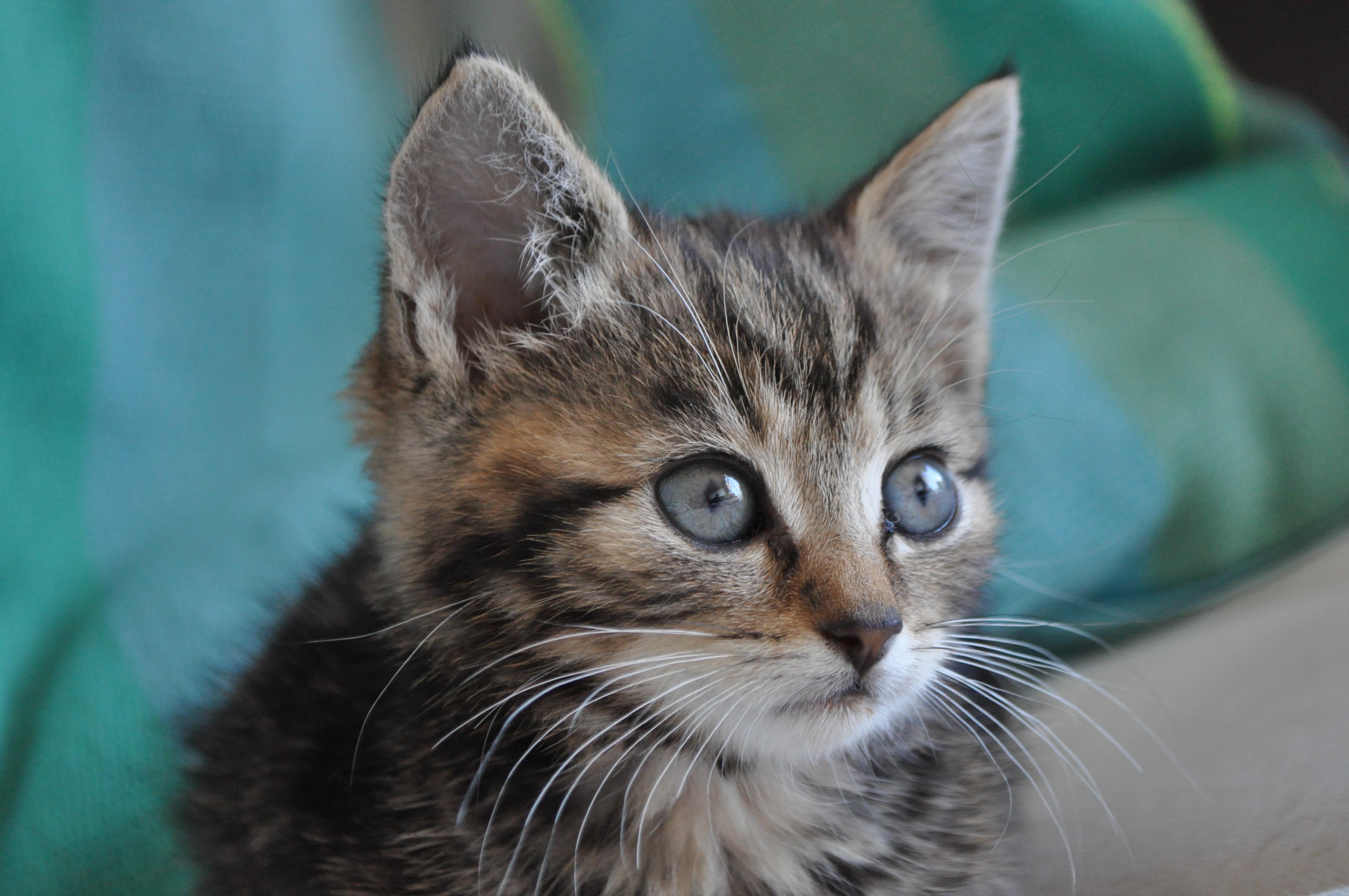 Groeiachterstand Bij Kittens Alleskatten Nl