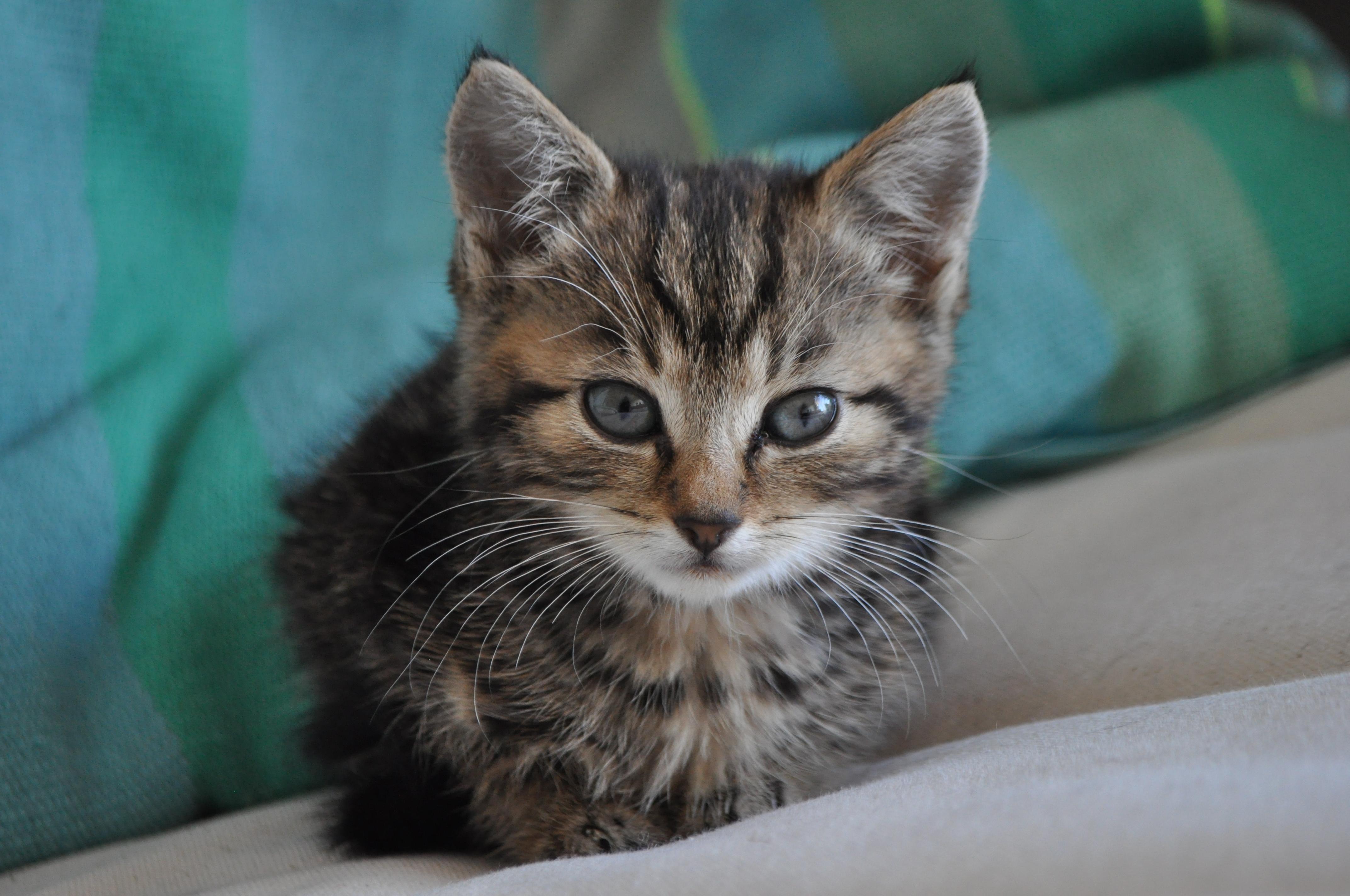 Groei Van Een Kitten Alleskatten Nl