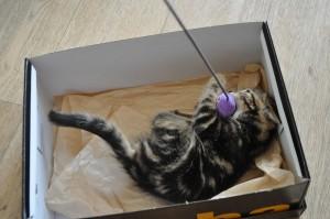 Kitten Lucy speelt