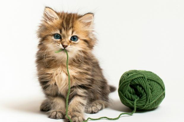 Afbeeldingsresultaat voor kat