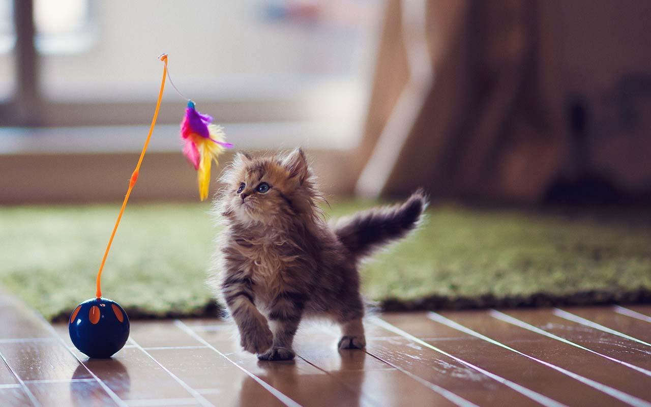 allergische reactie voor katten