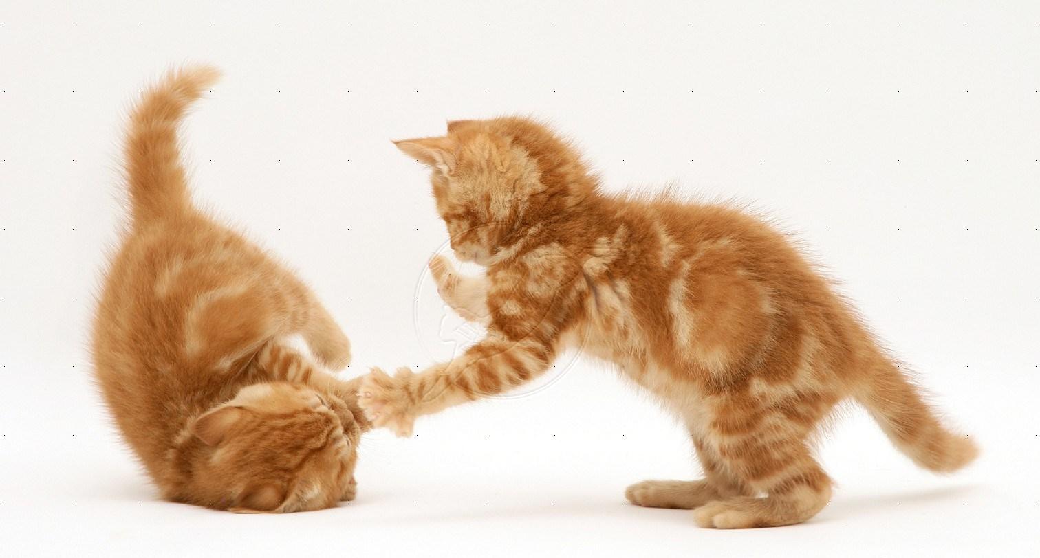 jonge kittens