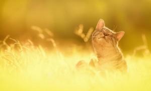 Overlijden kat