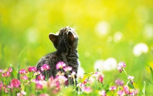 artikel kubbler ross 5 fasen van rouw