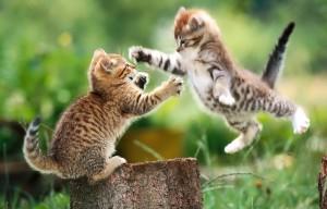 Overlijden kat 6