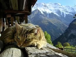 Kat berg
