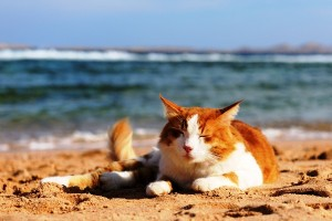 Kat op strand