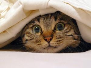 Kat verstopt