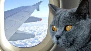 Kat vliegtuig