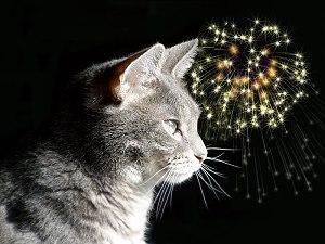 Kat vuurwerk