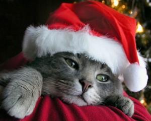 Kerst kat