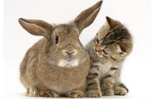 Kitten en konijn