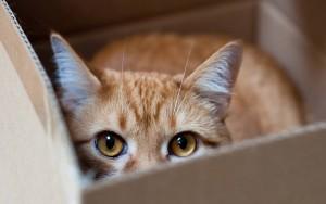 Kat in doos 2