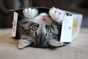 Kat in doos 3