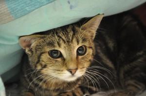 Kitten Lucy op de Felikat show