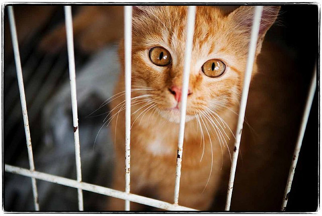 Kat in een bench - alleskatten.nl