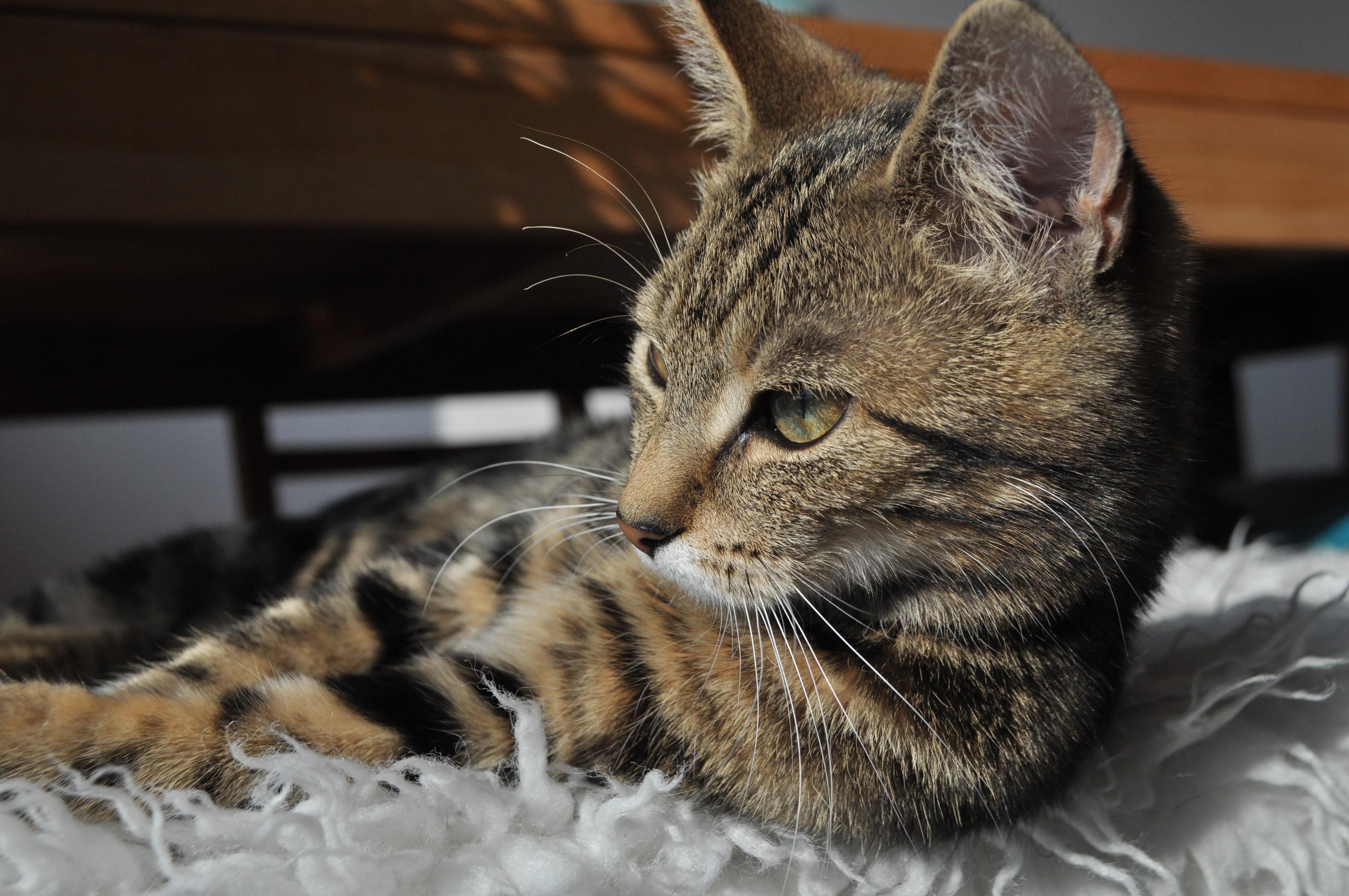 alleskatten.nl - Alles over Katten